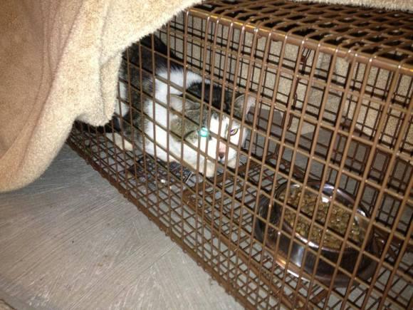 Macario in trap