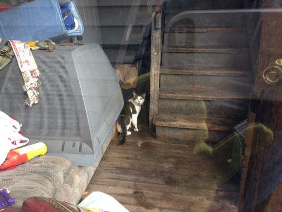 Macario back porch