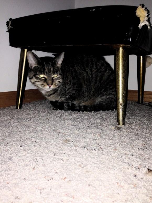 Kim's Zena cat