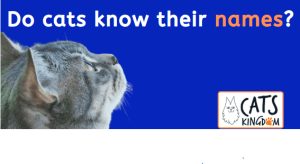 Picture of cat looking at the words 'Do cats know their names?'