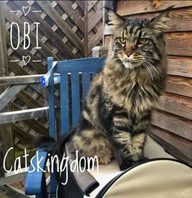 catskingdom-1