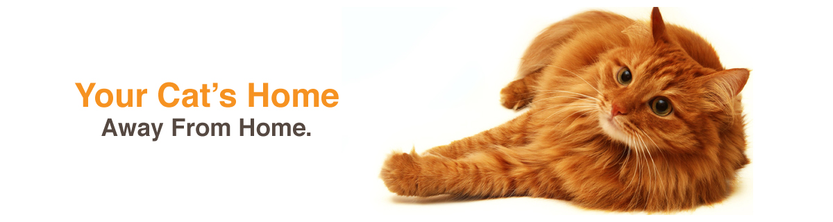 CATS-MEOW-BANNER-HOME