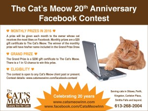 Cats-Meow-Inn-Anniversary-contest3
