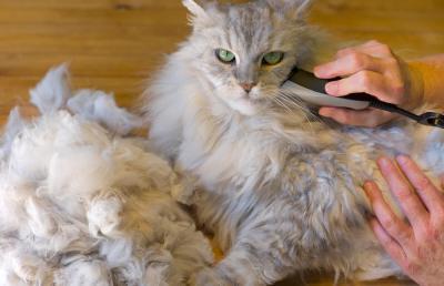 Matted Cat Fur