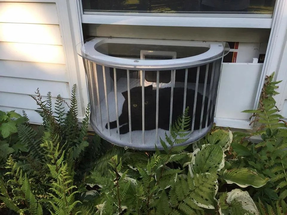 Catio Kitty Peeper Cat Veranda Cat Window Patio Cat Solarium Cat Window Box & cat solarium