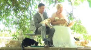 Canadian-couple-hold-wedding-in-front-of-1100-cats