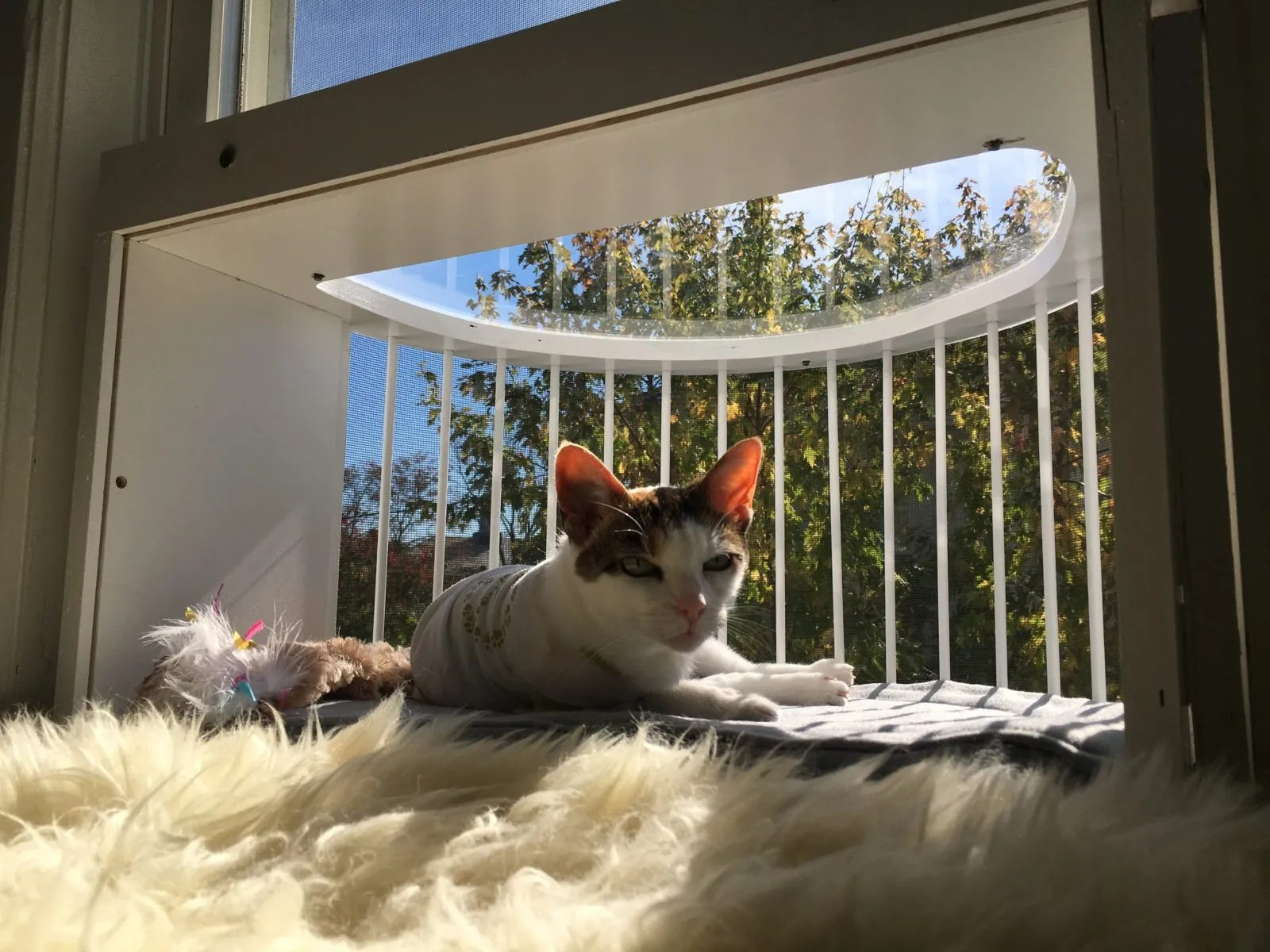 Cat Solarium Catio Cat Patio Cat Balcony
