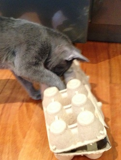 Egg Carton Puzzle Box Cat Stuff For Aussies