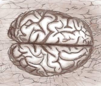 brainsketch