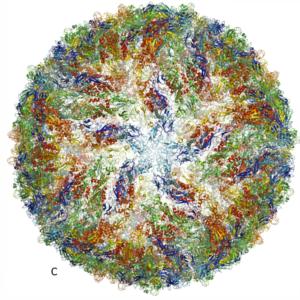 zika virus protein nobel prize chemistry 2017