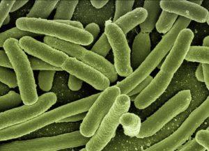 e-coli superbug antibiotic resistance