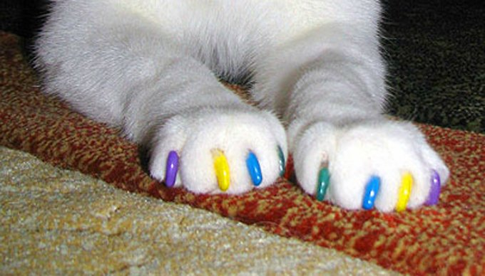 Soft Paws are one alternative to declawing: They are small vinyl caps that fit over your cat's claws.