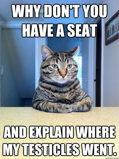funny cat memes with captions