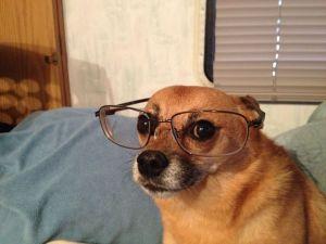 Omeopatia, scienza da cani