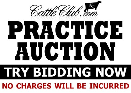 Practice Auction