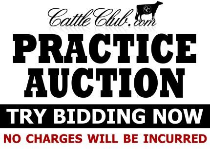 Practice Auction