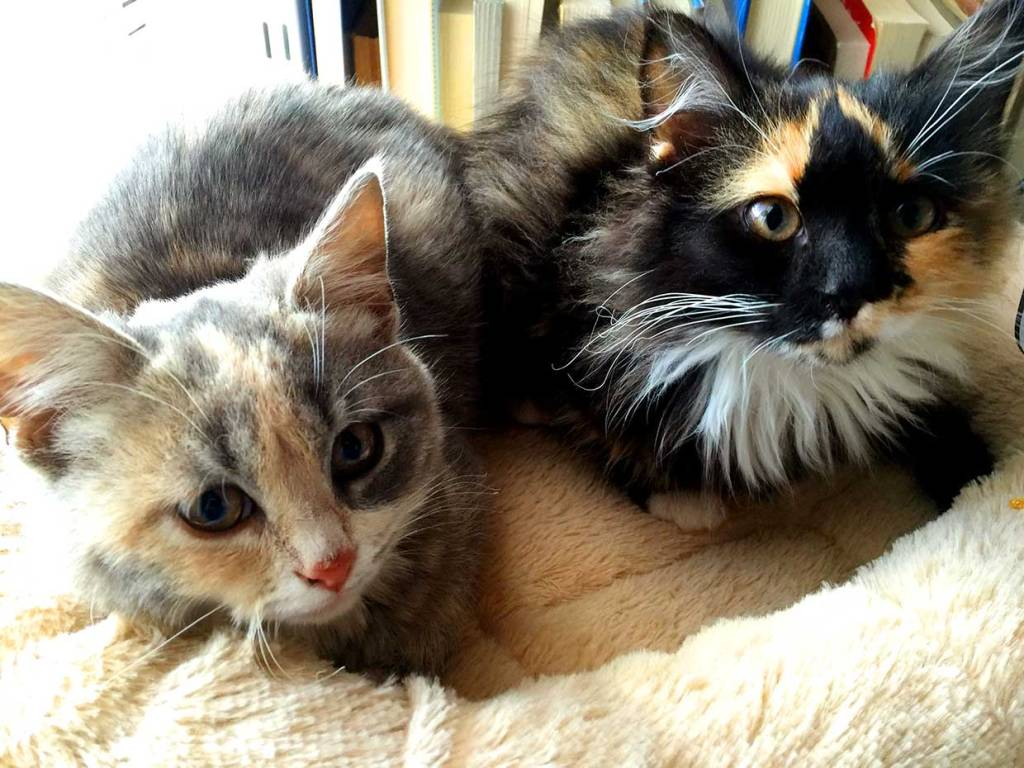 Two kittens abandoned at a motel in New Mexico after rescue. Cat Travel Tips donates to charities like the one that rescued the muted calico on left.