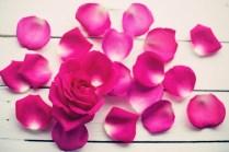 rose (1)
