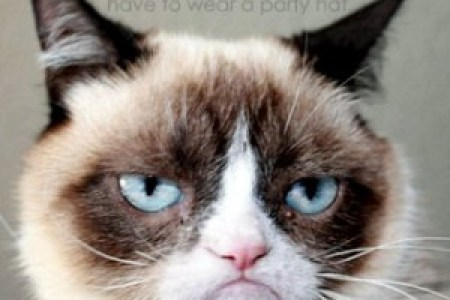 Grumpy Cat Birthday Full Hd Maps Locations Another World