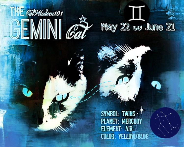 Double The Pleasure, Double The Fun: Astro-Kitty Gemini – Cat Wisdom 101: Everything Feline since 2011