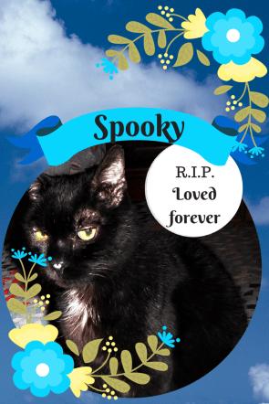 R.I.P. _spooky_cat