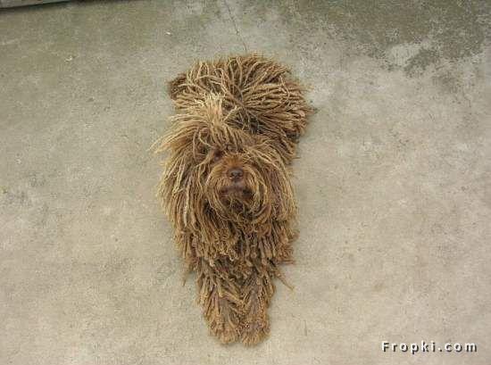 rope_dog_fropki7