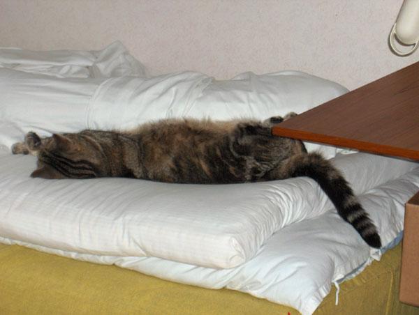 sovande_katt