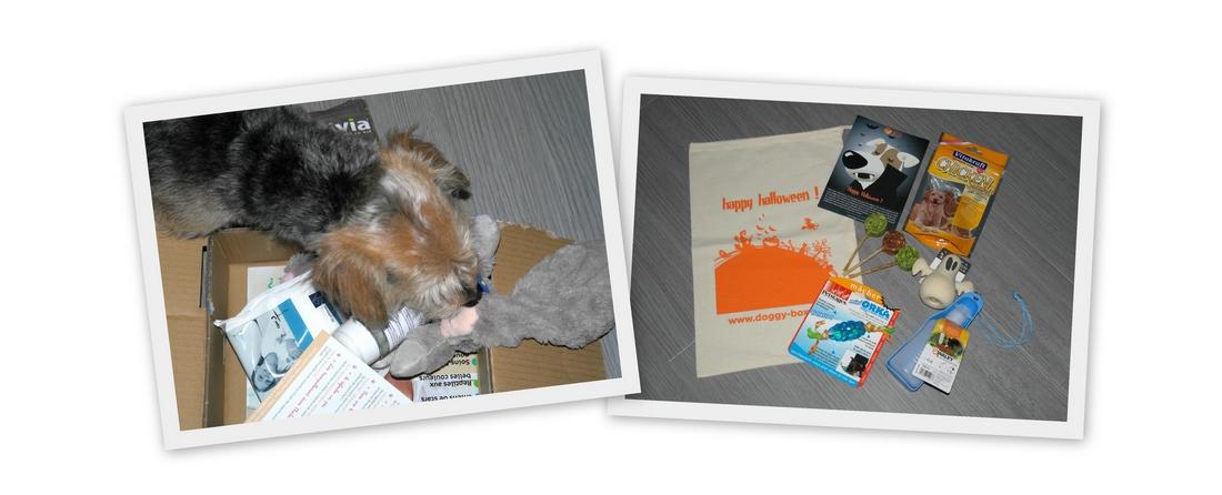 Box chien1