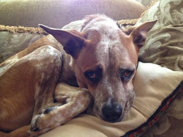 sad dog misery