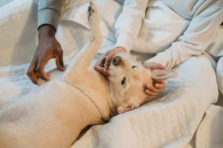 black man and woman playing with fluffy dog on bed