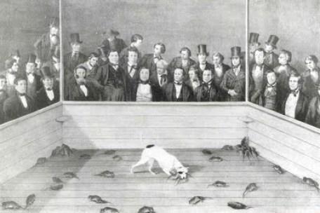 Rat Baiting