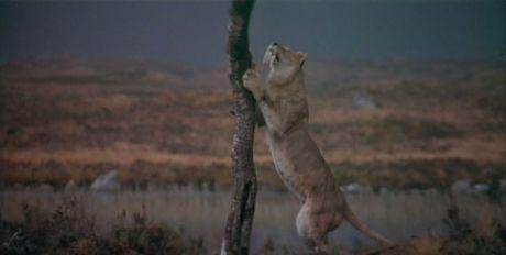 quest for fire movie sabretooth cat megafauna