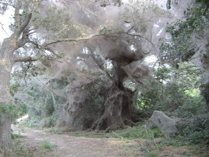giant-spider-web