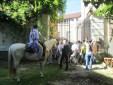 Cavalli si riposano alla Cavallerizza - Carovana Balacaval