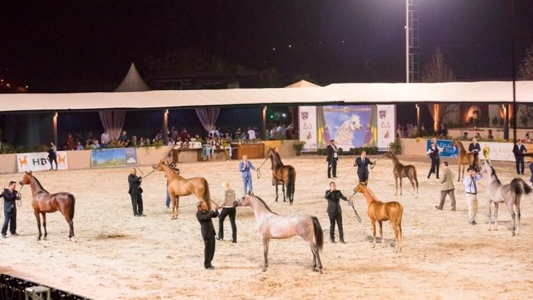 Exposição Nacional do Cavalo Árabe é reagendada para novembro