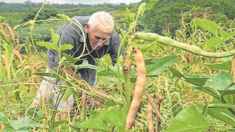 Agrobox: Produtor rural – devolução do Plano Collor