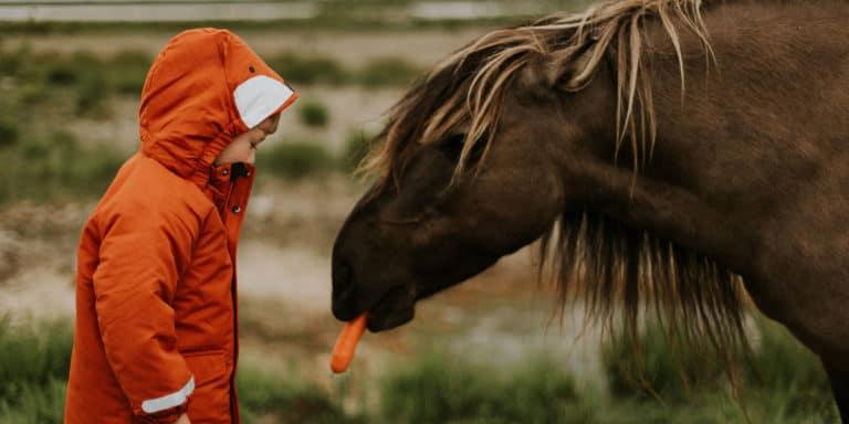 Como apresentar seu filho aos cavalos
