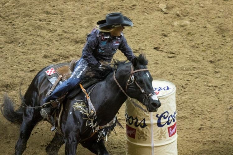 Conhecimento e estudo. Saber mais sobre os cavalos é a chave para ter o melhor deles.