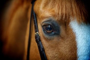 A visão do cavalo