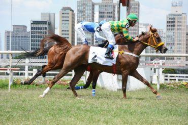 Catarina LA vence páreo da ABCCA no Jockey Club de São Paulo