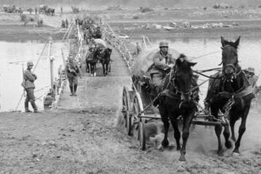 Data homenageia milhões de cavalos que morreram na guerra