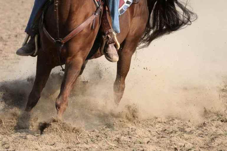 Doença articular degenerativa em equinos