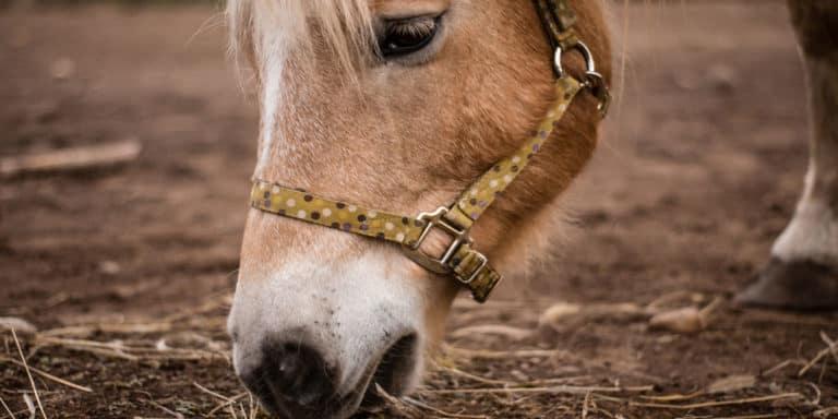 Por que seu cavalo está abaixo do peso?