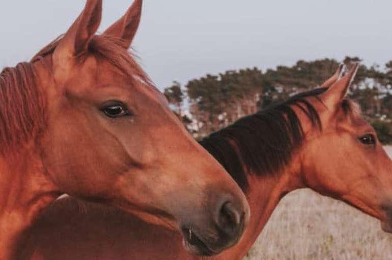 Os dez principais locais com cavalos nos Estados Unidos
