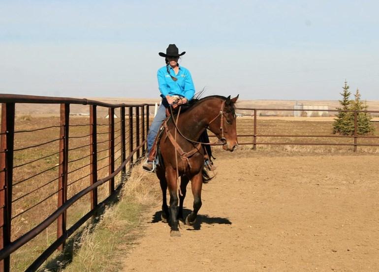 Posição da cabeça e pescoço e seus efeitos no corpo do cavalo