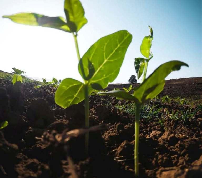 BNDES libera empréstimos para o Agro sem o CAR. O status de 'pendente' no Cadastro Ambiental Rural (CAR) não será mais empecilho para produtores rurais
