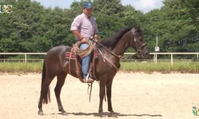 TV UC - Use o laço para treinar o cavalo de cavalgada