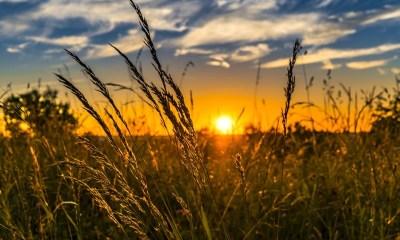 181 Senado aprova prorrogação de contratos do Ministério da Agricultura