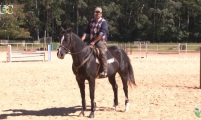 TV UC - Exercício de descontração, engajamento e flexibilidade para seu cavalo