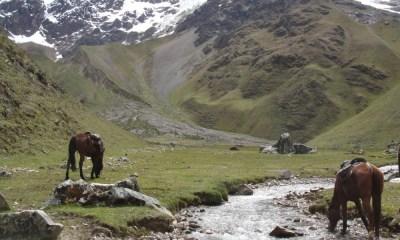 Cavalgada para Machu Picchu com equipe da EPTV/Globo Paulo Junqueira aborda em seu artigo da semana a respeito de uma cavalgada que fez a Machu Picchu com uma equipe de TV